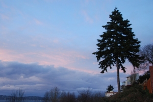 WS Pine at Sunset